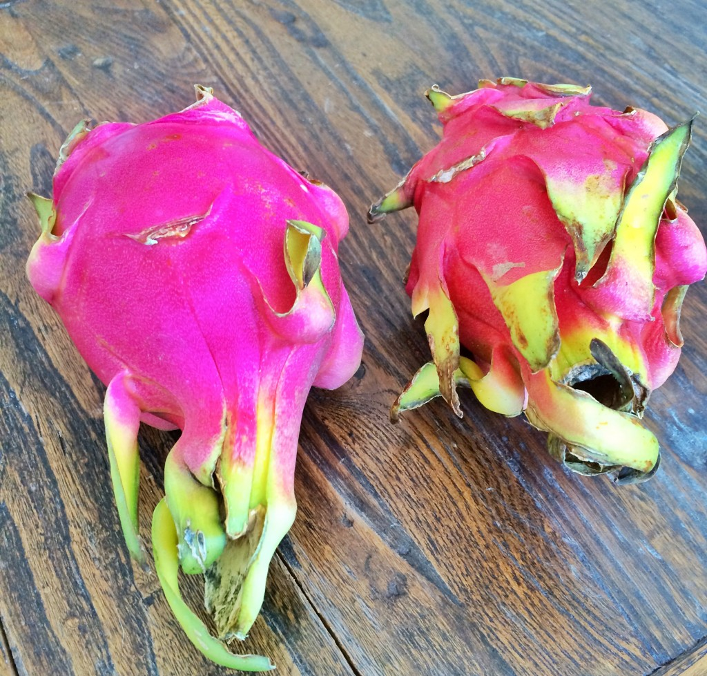 The beautiful Dragon Fruit
