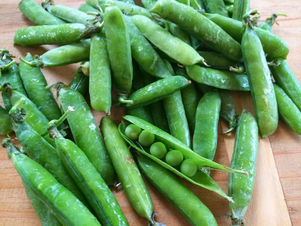Organic peas in the pod from the Rhinebeck Farmers Market, upstate New York